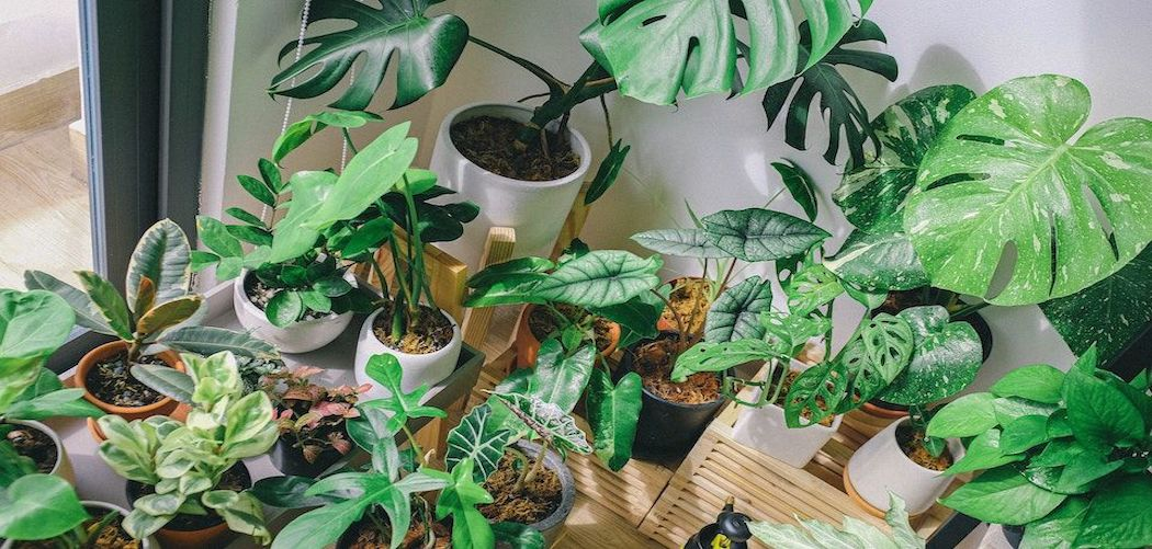 Can you have too many houseplants? Many houseplants in a corner
