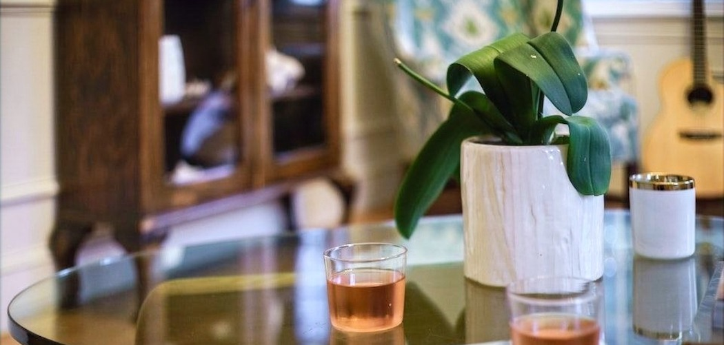 Can plants get drunk, potted plant with alcoholic drink