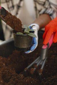 Can houseplants be recycled? Recycle potting soil
