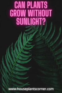 can plants grow without sunlight, Pinterest pin