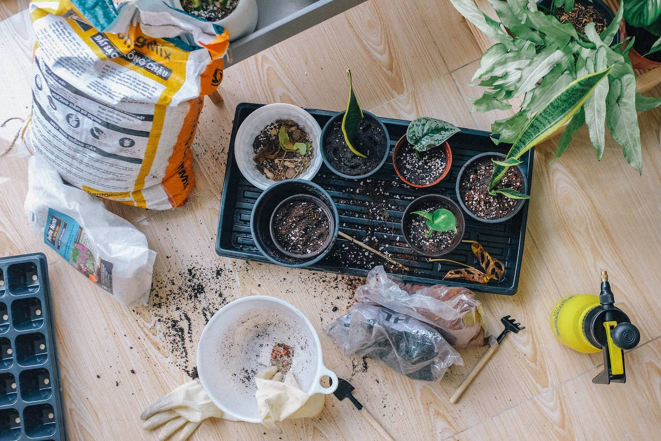 Can plants stay in plastic pots? Changing soil and containers in plants on a table.