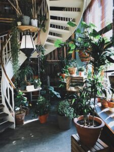 Can you have too many houseplants in your house? Many houseplants in a room.