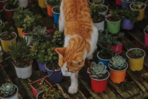 Can you have too many houseplants? Cat walks in between plants