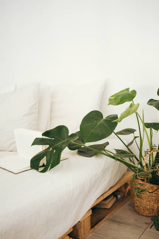 Are indoor plants bad for asthma? houseplant near bed