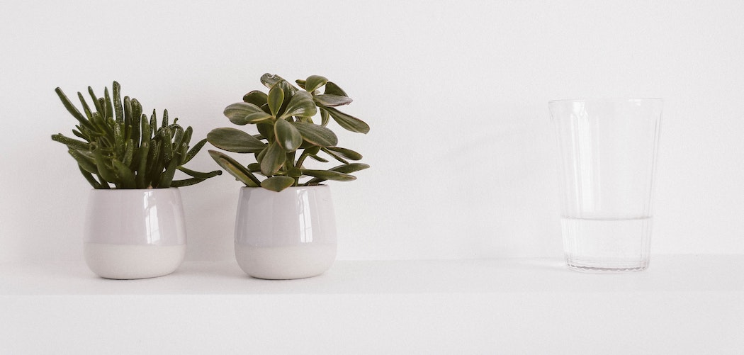Is sugar water good for houseplants? two plant pots near sugar water
