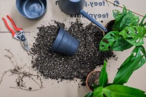Can a plant regrow its roots? Here's exactly what to expect! Plant soil, pot, scissors and roots.