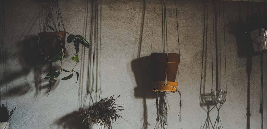 Can houseplants case black mold? Explained. Plants in hanging pots on a wall with mold.