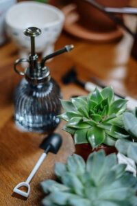 Can you mist your plants everyday? 9 facts to know. Succulents and a plant mister on a table