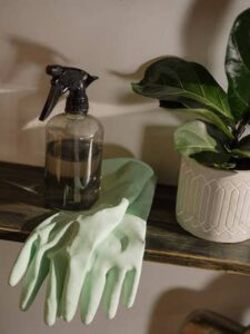Can you mist your plants everyday? 9 facts to know. A plant, a spray bottle and a pair of gloves on a shelf