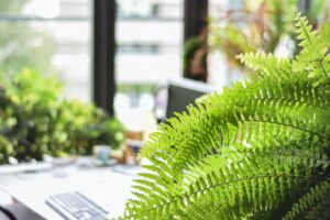 Do indoor plants need a humidifier? 7 Indoor Plants that Do. Boston fern