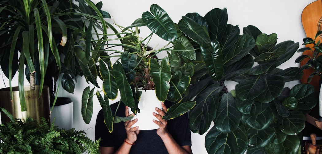Why are houseplants addictive? man covered in houseplants