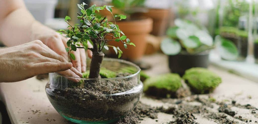 Why do plants need soil? Plant in a transparent glass pot with soil