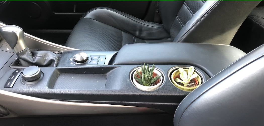 Can You Grow Plants In Your Car? succulent plants growing in cupholders of black car
