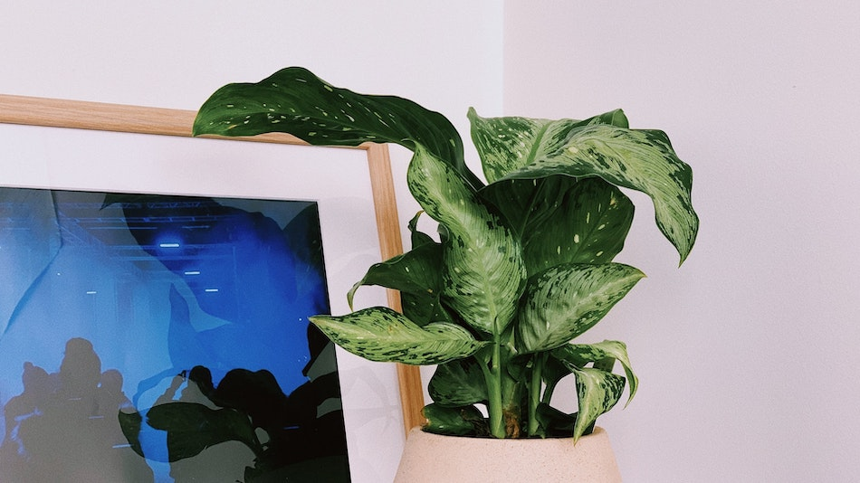 Do TV's affect plants? tv light being used as grow light for plant
