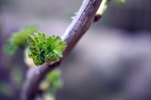 What Happens If A Plant Loses Its Leaves? Leaf shoot appearing
