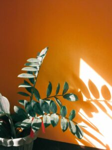 How do indoor plants know what season it is? Houseplant in sunlight.