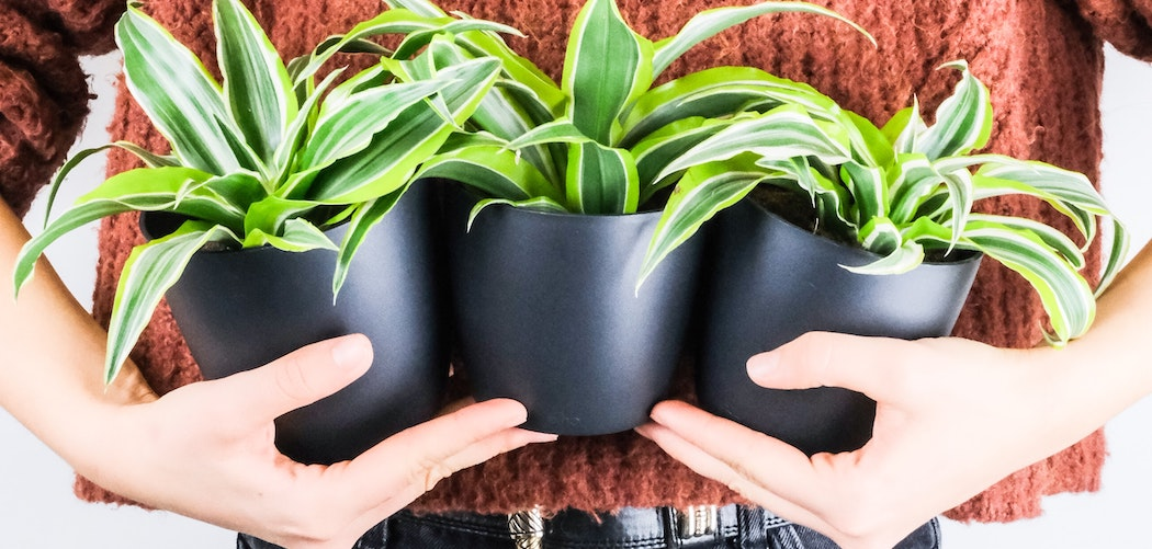 Why are houseplants important? Person holding 3 houseplants