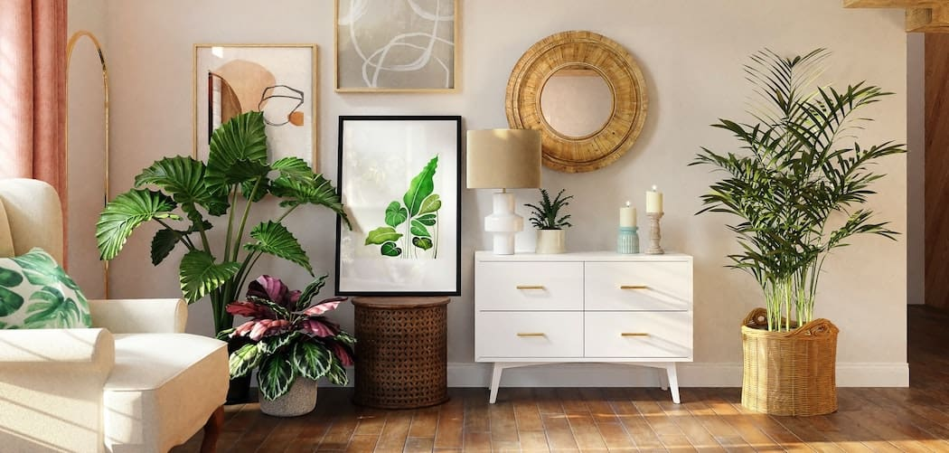 Large indoor plants sitting in a well lit living room