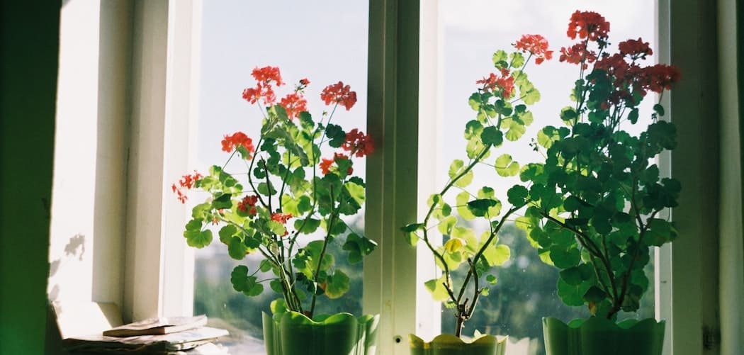 Do houseplants grow all year round? houseplants sitting in the sunny window growing