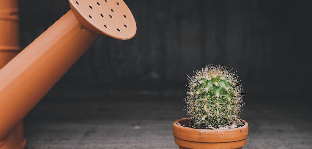 Do indoor plants need drainage holes? cactus in clay pot being watered