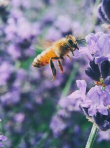 Can plants survive without humans? Bee pollenating a flower