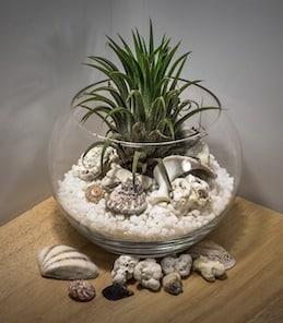 10-longest-living-indoor-plants-air-plant