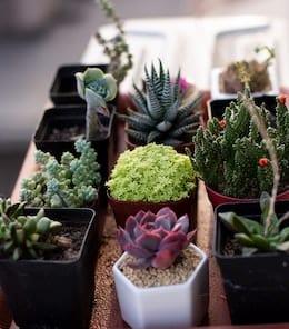 10-longest-living-indoor-plants-succulents-cacti